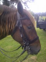 Riding Bridles